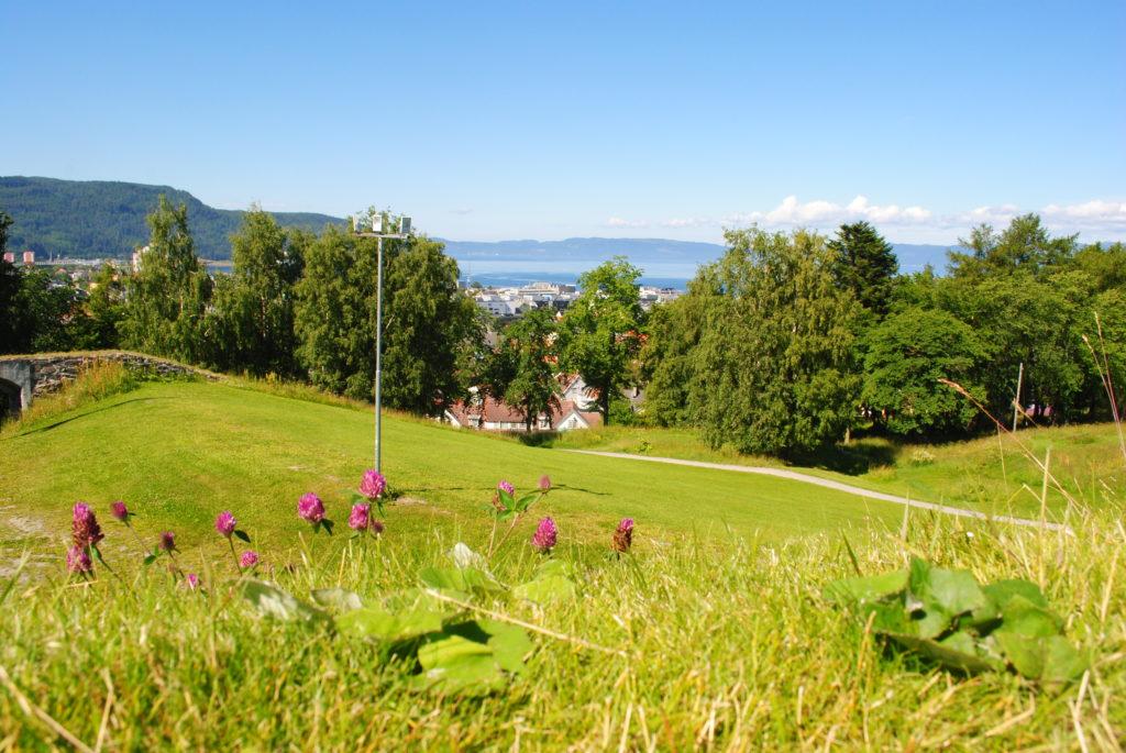 wycieczka do Norwegii, lofoty, fiordy, lato w Trondheim