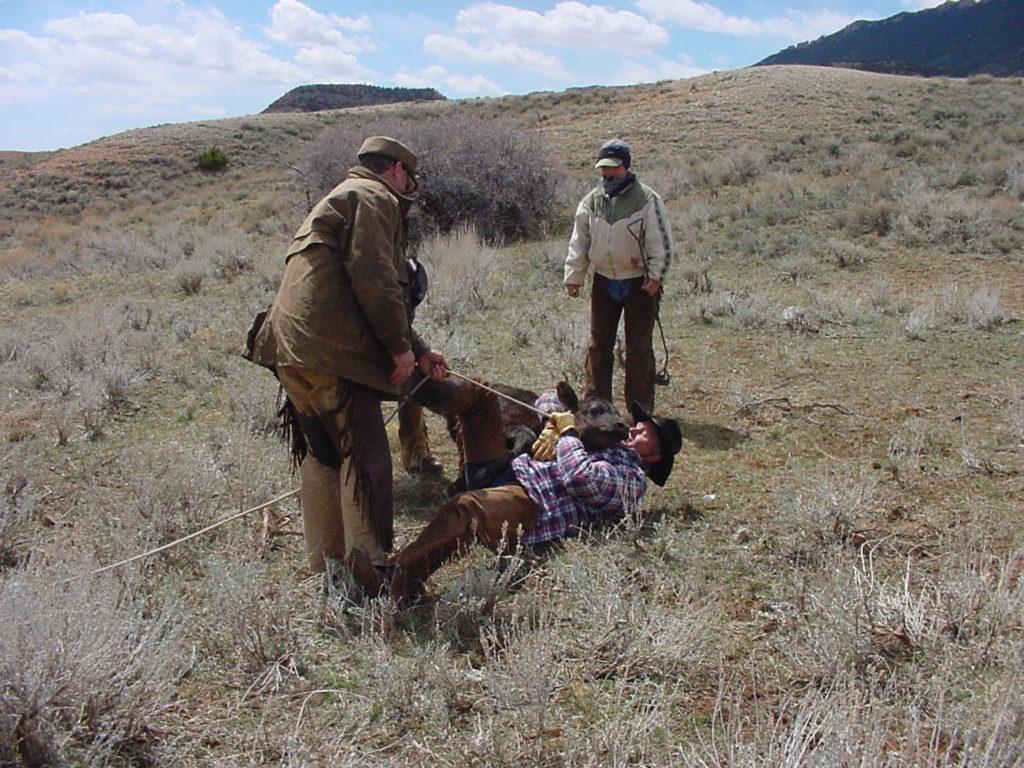 Kowboje w Ameryce, pętanie cielęcia