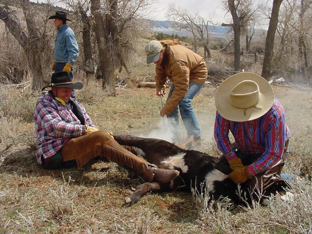 Kowboje w Ameryce, wypalanie brandu