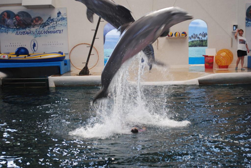 Podróż do Bułgarii, delfiny w Warnie