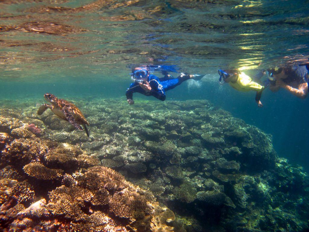 Rafa koralowa, żółw