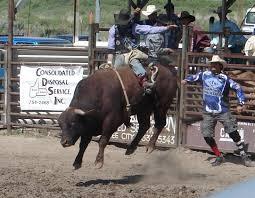 Amerykańska wołowina, rodeo z bykiem