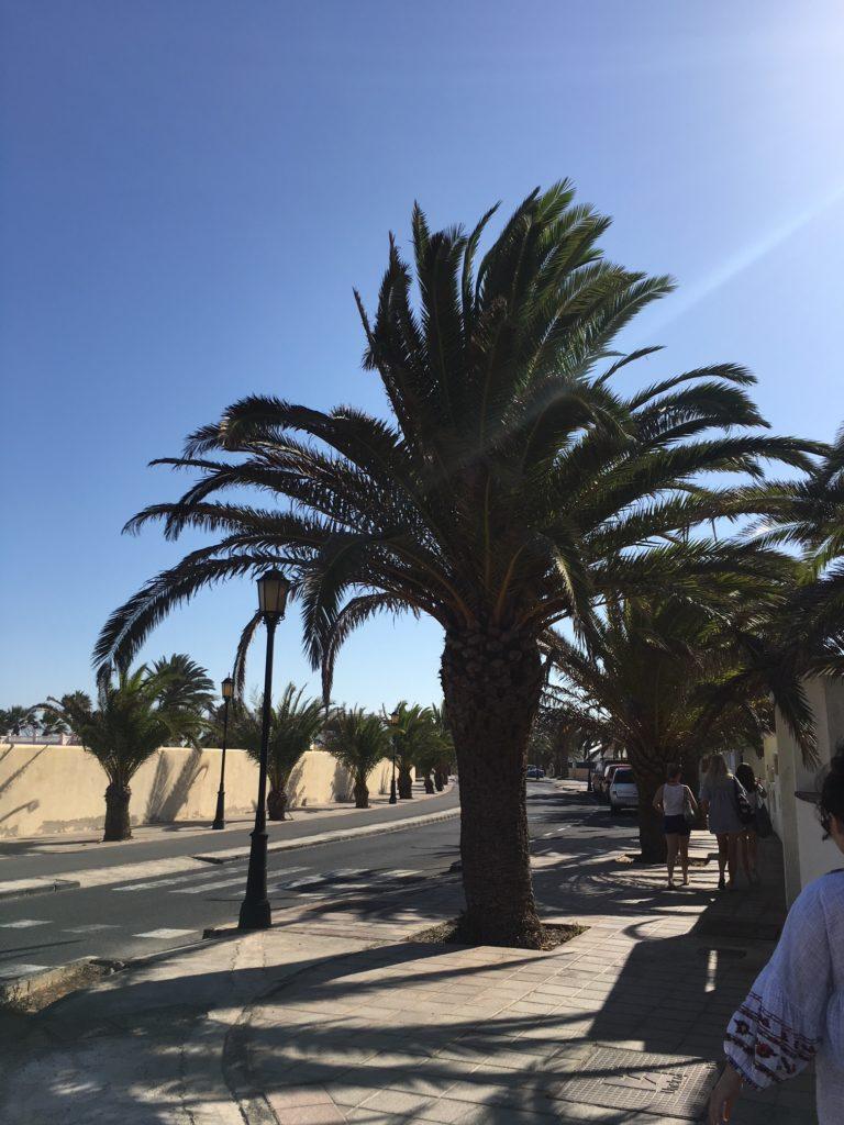 Podróż na Wyspy Kanaryjskie, palmy