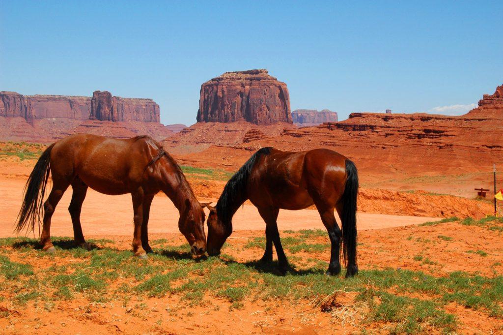 Arizona, mustangi w Monument Valley