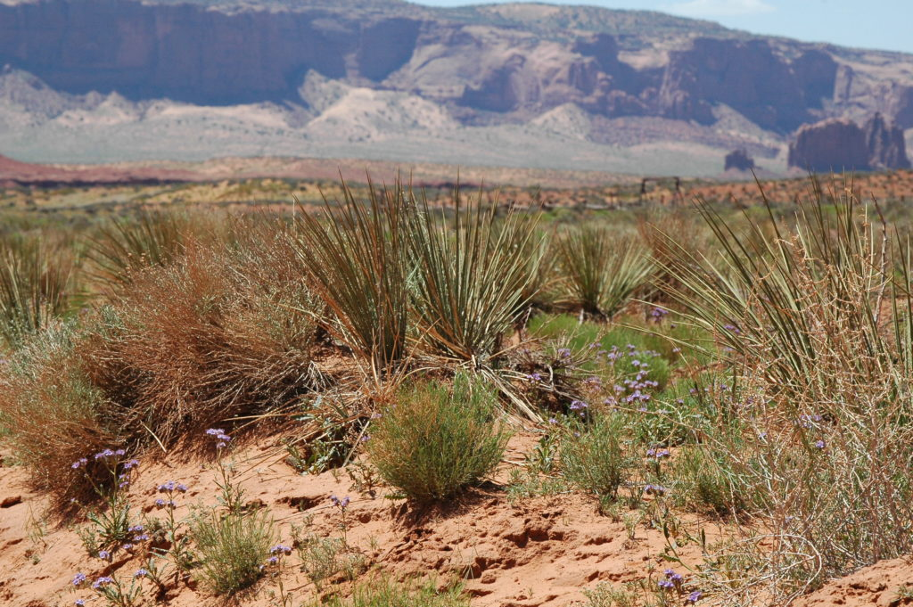 Arizona, widok prerii