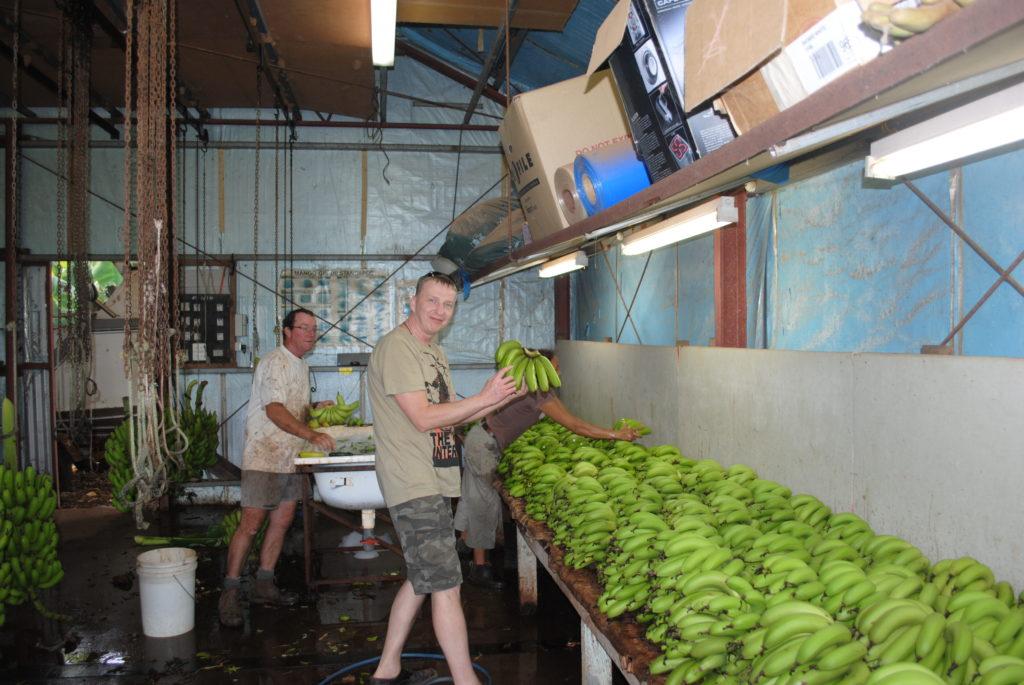 stepy australijskie, wybieram banany