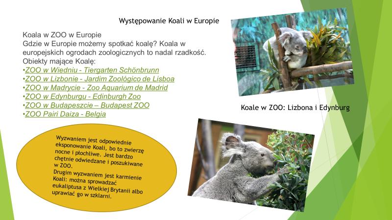 Koala w Europie, rozpiska ZOO w Europie
