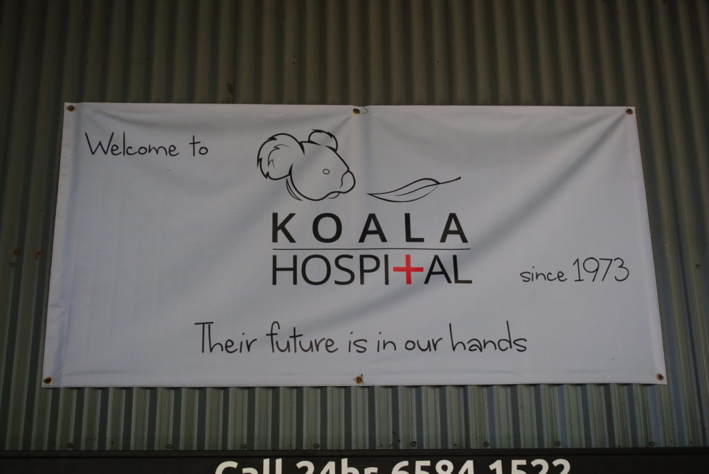 Australijska koala, tutaj Cię uratujemy