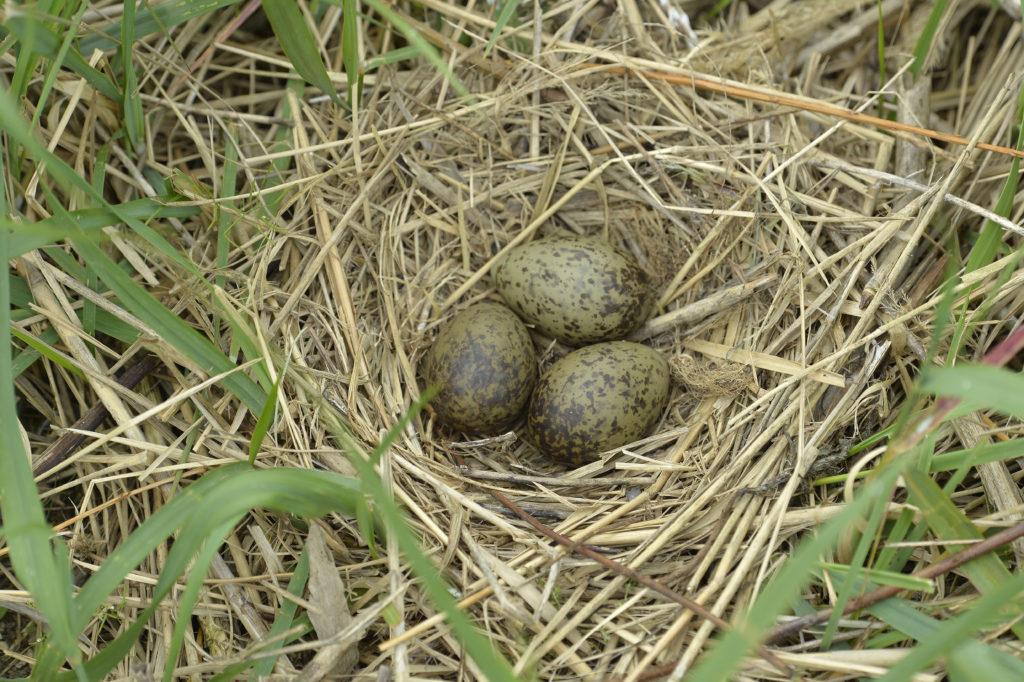 Jaja i jajka, gniazdo 1
