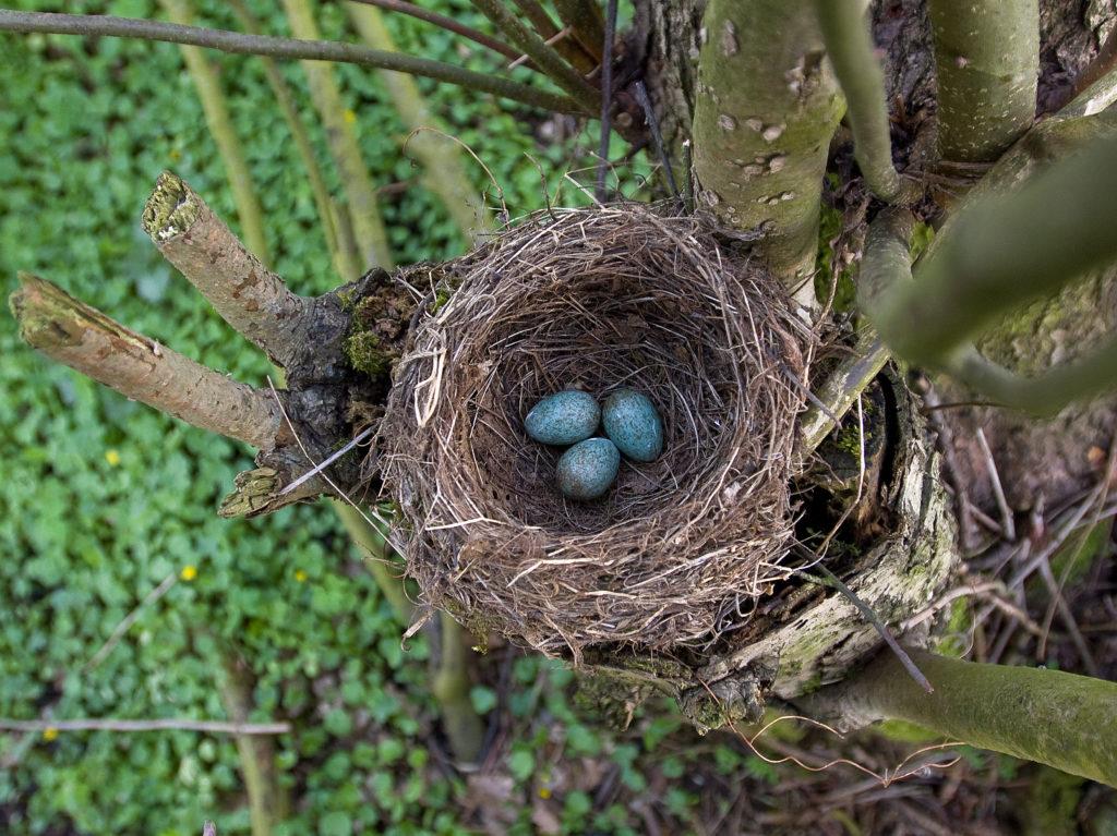 Jaja i jajka