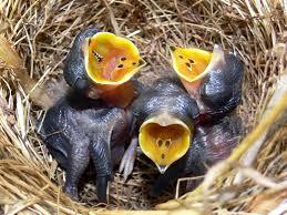 Jaja i jajka, zagniazdowniki
