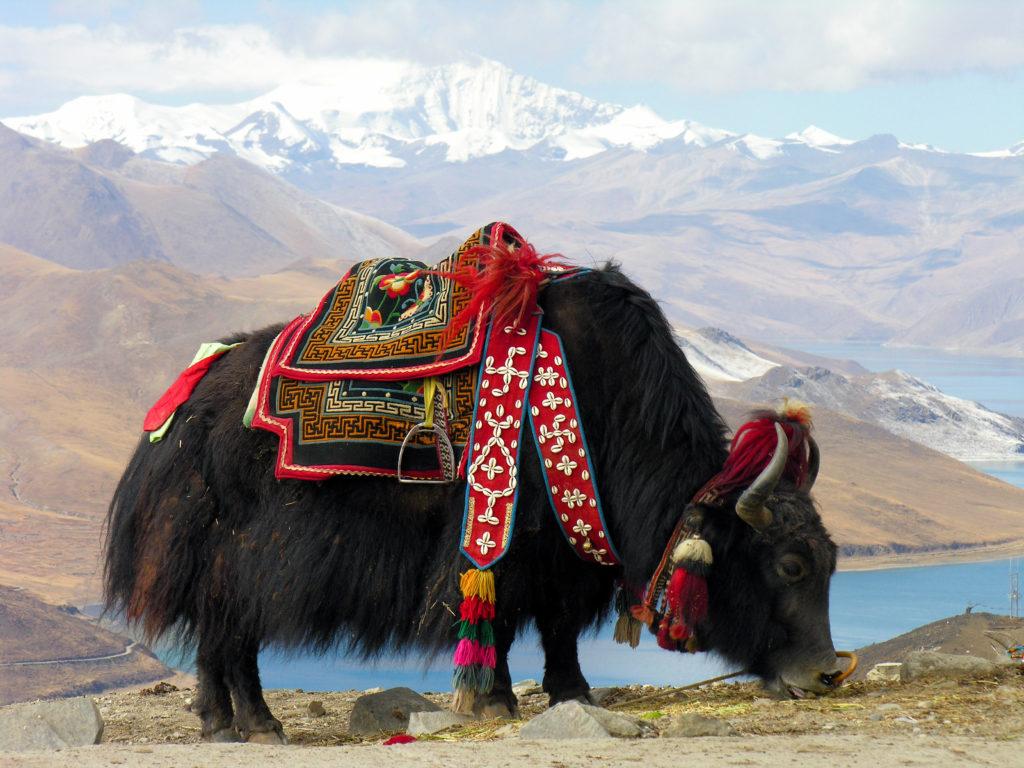 Jak w Nepalu, gotowy do pracy