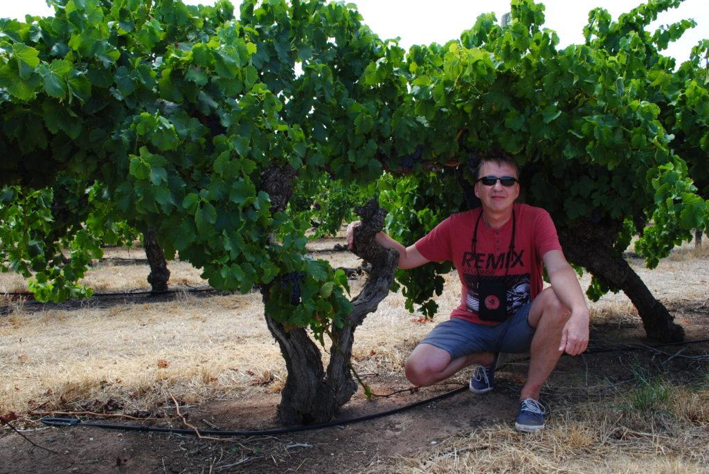 Australia Zachodnio-Południowa, winnice w Barossa Valley