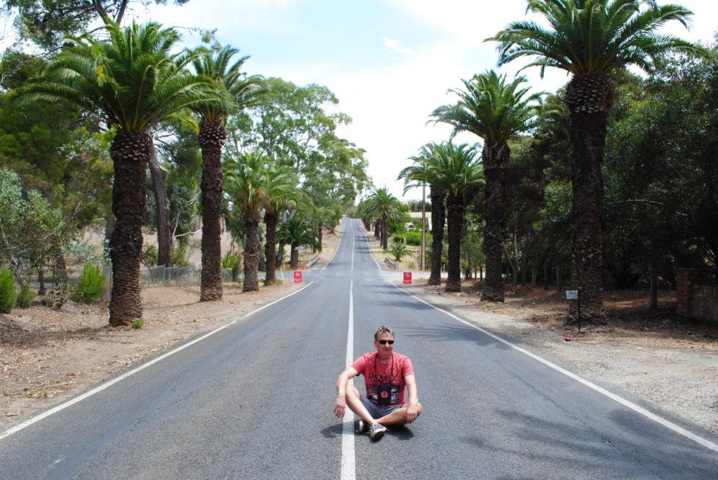 Australia Zachodnio-Południowa, palmy w Barossa Valley