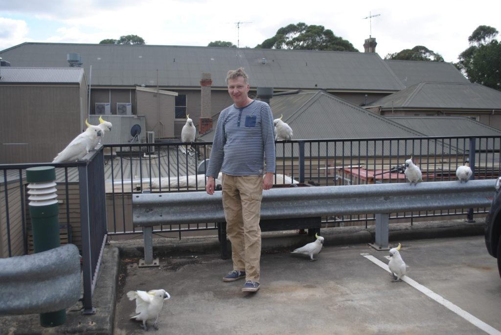 Wyprawa na Great Ocean Road, papugi atakują w Lorne