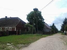 Bocian polski, gniazdo w Kłopocie