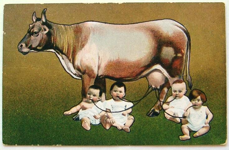 Jackie Chan. Chińska krowa daje ludzkie mleko