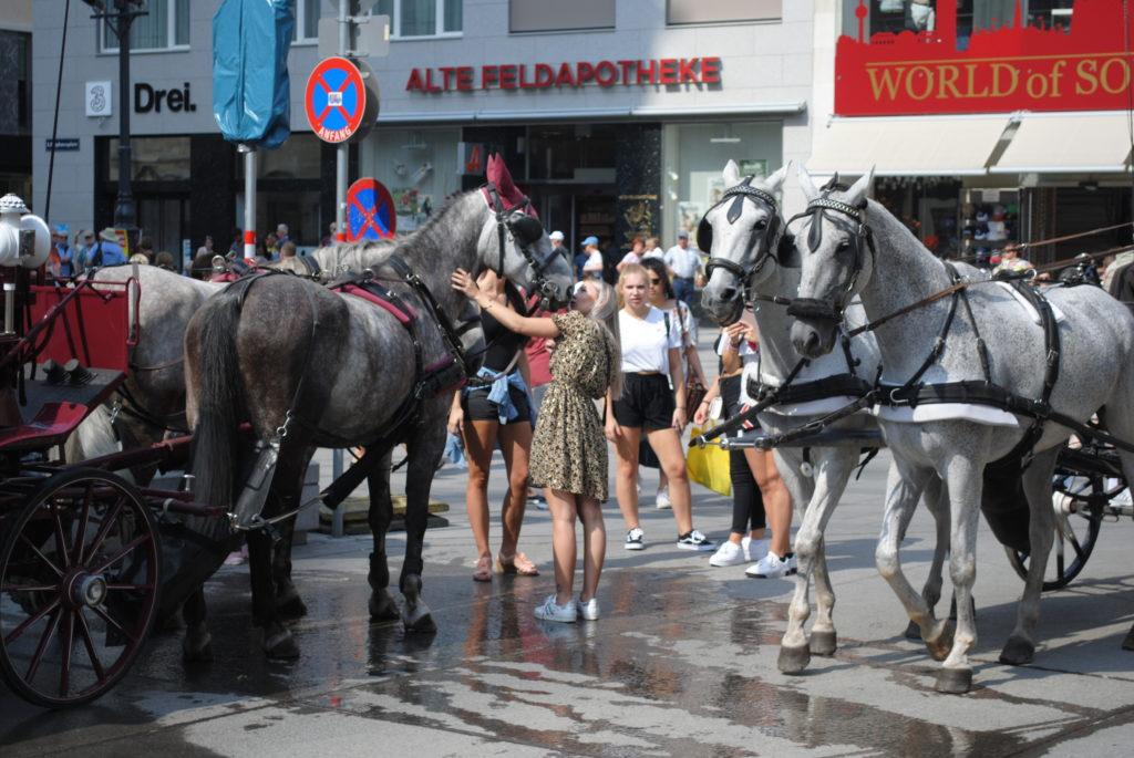 Zwiedzanie Wiednia. Turystka całuje konia na placu Stephana.