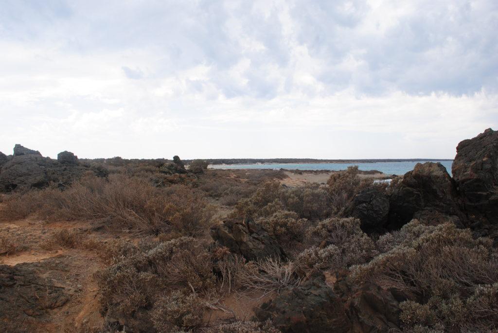 Wyspa Chrissi. Afrykańska roślinność wyspy.