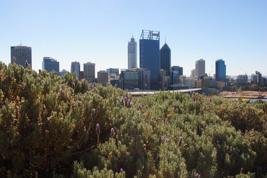 Perth, Australia Zachodnia. Panorama miasta z Kings Park.