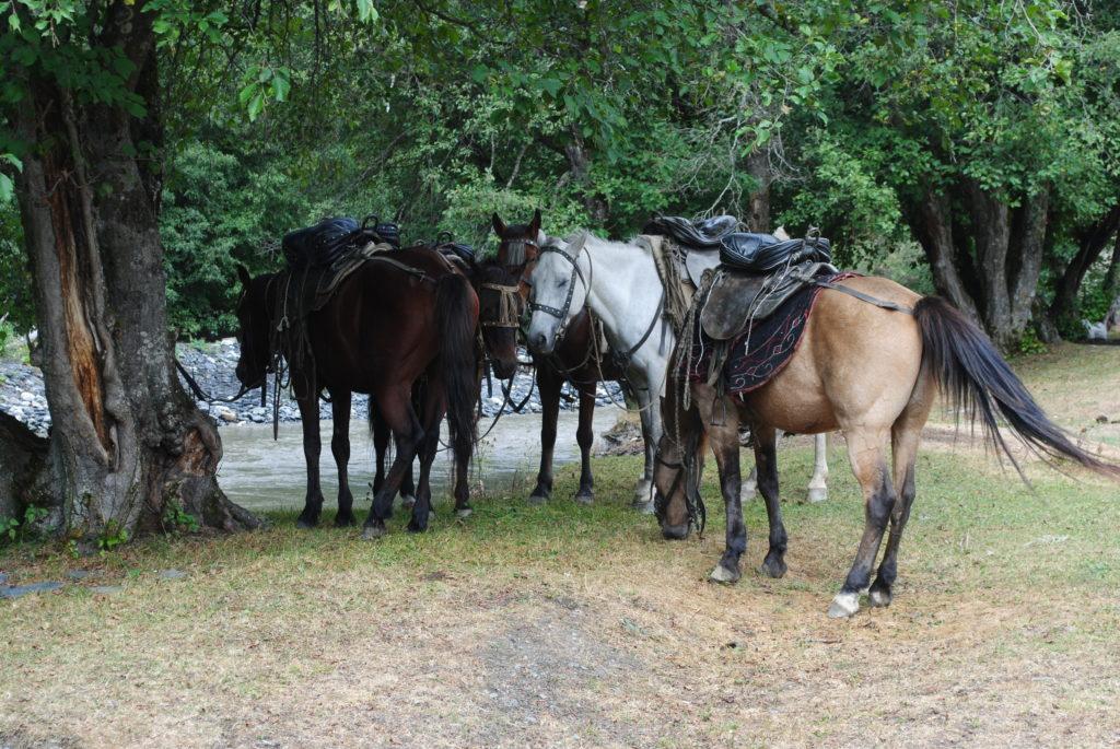 Atrakcja w Tuszetii. Koniki czekają na chętnych.