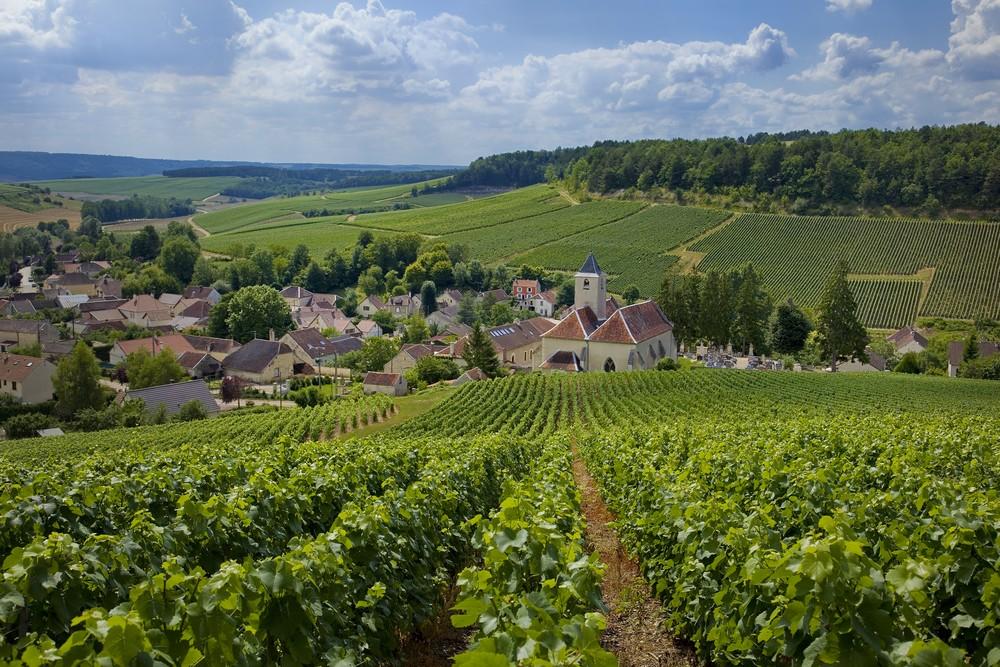 Podróż do Francji. Winnica na szampana.